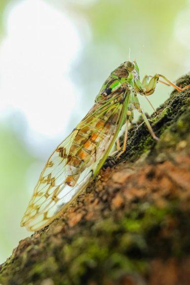 cicada-908128_1280